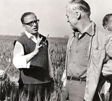 Borlaug's Dwarfs